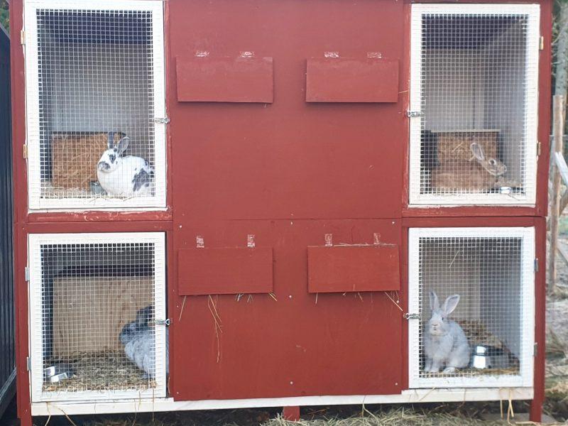 Vår stora kaninbur
