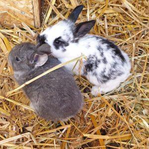 Kaninungarna skuttar runt